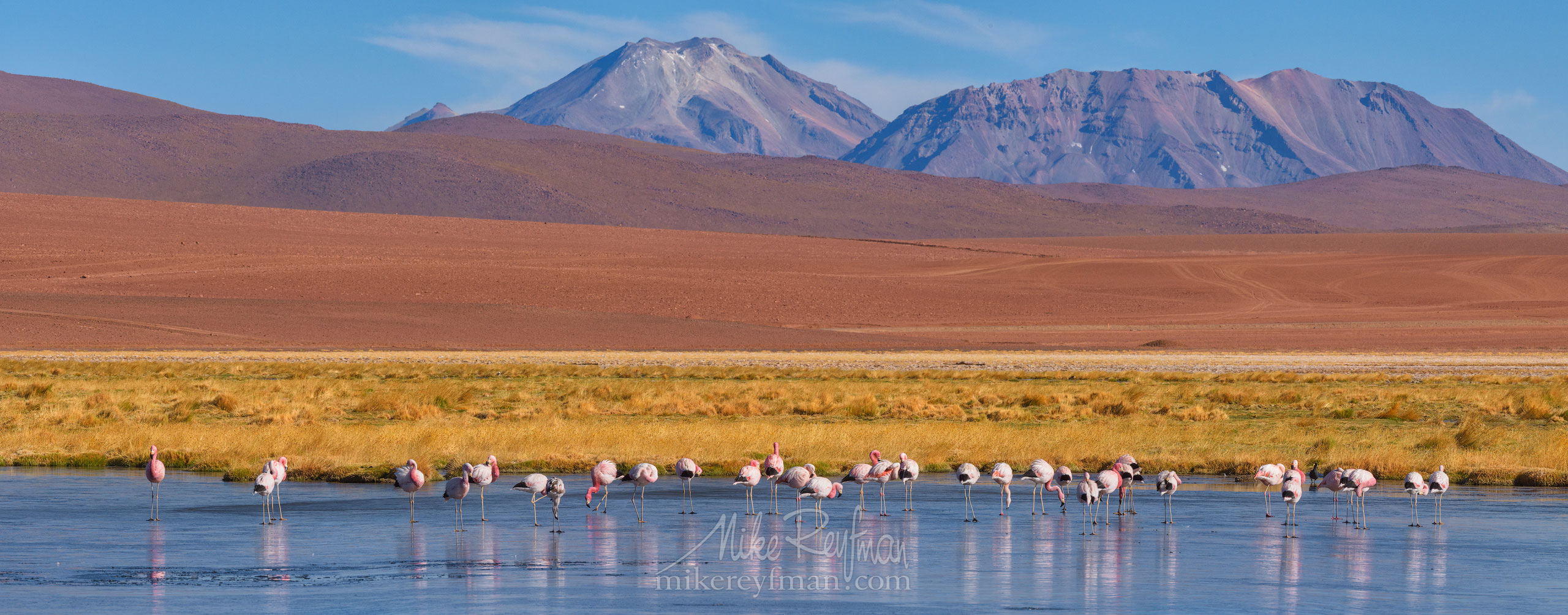 Flamingos in the Putana river. Rio Putana, San Pedro de Atacama, Atacama Desert, Antofagasta Region, Chile AA1-D1D8940_Pano_1x2.55 - Atacama and Altiplano. The Driest Desert and The High Plain - Mike Reyfman Photography
