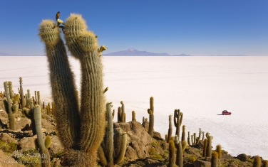 AA1-AIR1767 - СОЛЬ ЗЕМЛИ или Путешествие по Высокой Плоскости, Атакама и Альтиплано. Чили, Боливия  •  ноябрь 2018 - Mike Reyfman