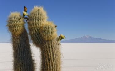 AA1-AIR1776 - СОЛЬ ЗЕМЛИ или Путешествие по Высокой Плоскости, Атакама и Альтиплано. Чили, Боливия  •  ноябрь 2018 - Mike Reyfman