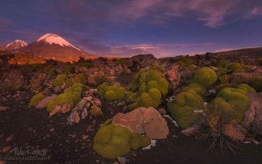 Parinacota-and-Pomerape-Stratovolcanos-(Nevados-de-Payachata)-with-Yareta-plants-on-the-foreground.-Lauca-Biosphere-Reserve.-Altiplano,-Chile