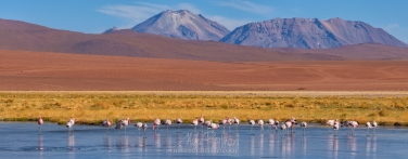 AA1-D1D8940_Pano_1x2.55 Flamingos in the Putana river. Rio Putana, San Pedro de Atacama, Atacama Desert, Antofagasta Region, Chile