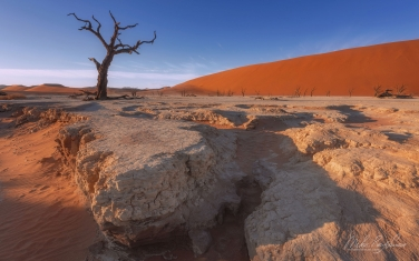 Soaring Orange Dunes, Deep Blue Sky and Ancient Skeletons of Camel Thorn Trees. DeadVlei & SossusVlei, Namib-Naukluft National Park, Namibia. - Landscape, Nature and Cityscape Photography - Mike Reyfman Photography - Fine Art Prints, Stock Images, Nature Abstracts