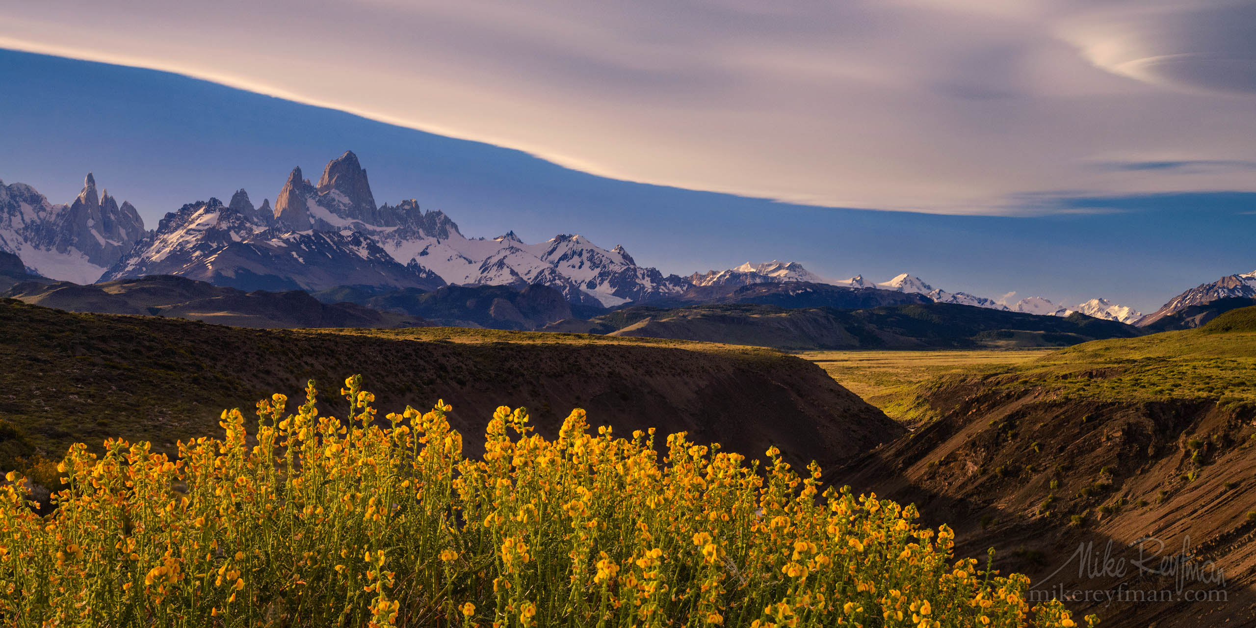 Patagonia splines. Native to Patagonia Paramela flowers (Adesmia boronioides) on Las Vueltas River canyon overlook. Fitzroy and Cerro Torre massifs on the background. P12-MRD8C3951 - Selected panoramic images with 2:1 aspect ratio - Mike Reyfman Photography