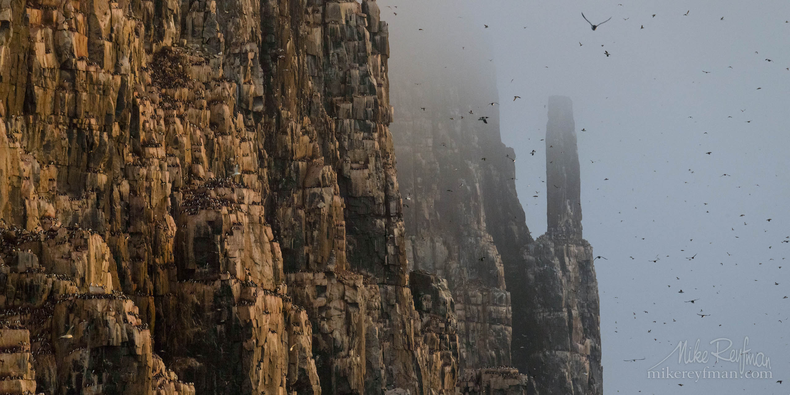 Tens of thousands of Brünnich's Guillemots nest on dolerite towers of Alkefjellet - The Bird Mountain. Hinlopenstretet, Spitsbergen, Svalbard P12-MRD8D3320 - Selected panoramic images with 2:1 aspect ratio - Mike Reyfman Photography