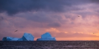 Bergs-and-Albatrosses-in-the-Antarctic-Sound.